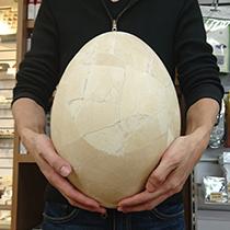 エピオルニスの卵