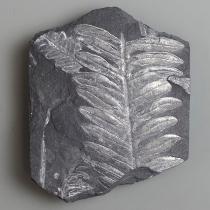 アレソプテリス