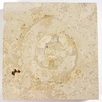 大理石中のアンモナイト