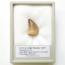 モササウルスの歯(¥1,620)