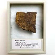 植物食恐竜の骨