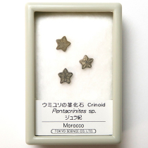 ウミユリの茎化石
