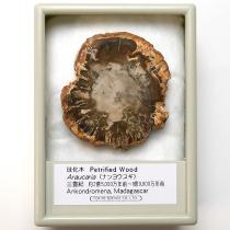 珪化木 アラウカリア