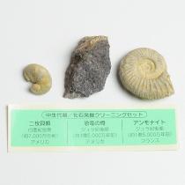 化石発掘クリーニングセット 中生代編