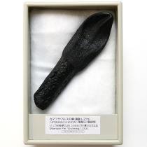 カマラサウルスの歯(レプリカ)
