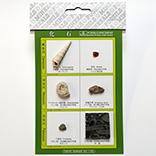化石標本6種