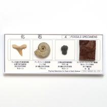 化石標本4種