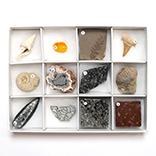 化石標本12種