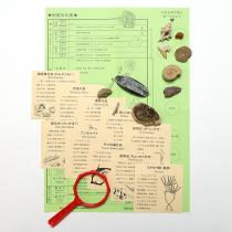 化石コレクション10種