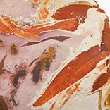 シダ種子類(グロッソプテリス)