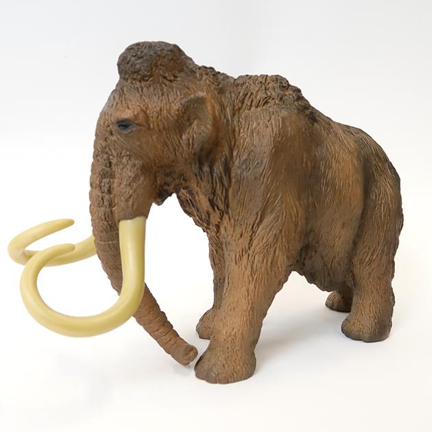哺乳類模型