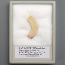 マンモスの牙