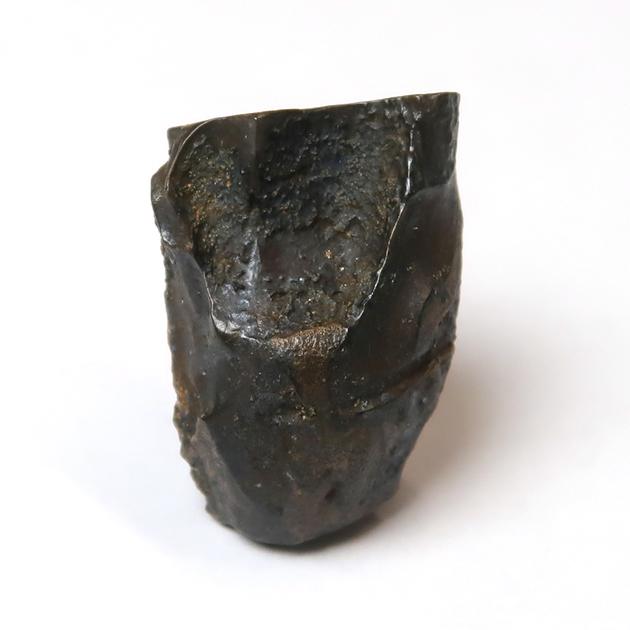 トリケラトプスの歯