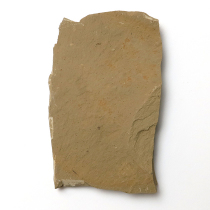 メタセコイア