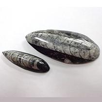直角石 オルソセラス