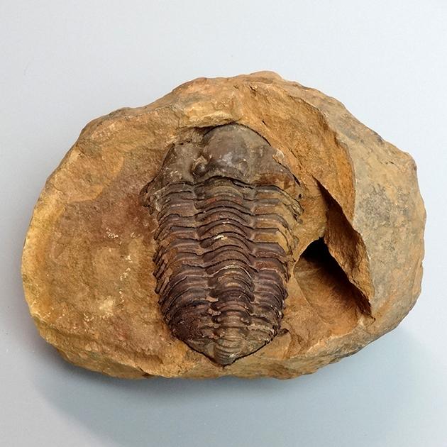 化石標本、鉱物標本、岩石標本の専門店