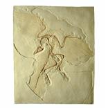 化石レプリカ