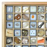 化石標本100種