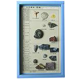 化石標本15種